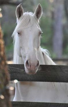 1000 images about white horses on pinterest white