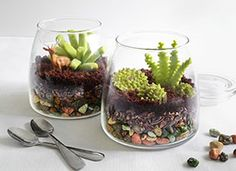 Edible candy terrariums The bottom layer is made of candy-coated chocolate rocks, the second layer is crunchy cacao nibs, and the third layer of crumbledchocolate cupcakes. The succulents modeled from candy clay. Chocolate Rocks, Chocolate Cupcakes, Crassula Ovata, Botanical Decor, Cactus Y Suculentas, Succulent Terrarium, Small Terrarium, Succulents Diy, Edible Art