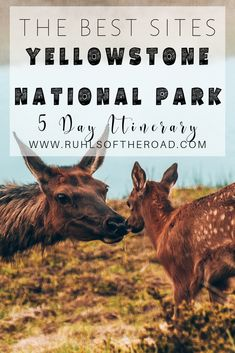 A 5 day travel itinerary to Yellowstone National Park in Wyoming, USA! The best things to do & the must see sites like Old Faithful, hot springs, geysers, waterfalls, wildlife (bison, bears, & more). The top hike in the park & where to stay for absolutely free on your road trip vacation. |  Yellowstone National Park Vacation | West Yellowstone Montana | Yellowstone Camping | Camping in Yellowstone | Lamar Valley Yellowstone | Things to do in Yellowstone | #yellowstone #wyoming #hiking #camping
