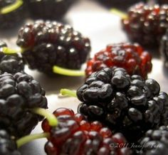 Don't let your fruit go to waste: How to freeze fruit properly #GROWmethod