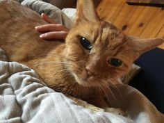This is my sweet girl Cookie. She crossed the rainbow bridge today. She was a senior cat that my husband and I rescued 3 years ago. Thank you for filling our hearts and home with so much love little girl. Miss you so much. by booness cats kitten catsonweb cute adorable funny sleepy animals nature kitty cutie ca