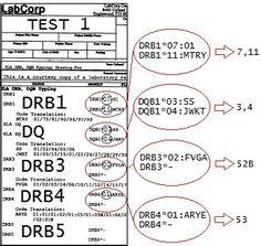 HLA DR 11-3-52B