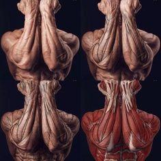해부학바디모음01 : 네이버 카페 #MuscleAnatomy