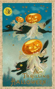 vintage Halloween postcard black cats