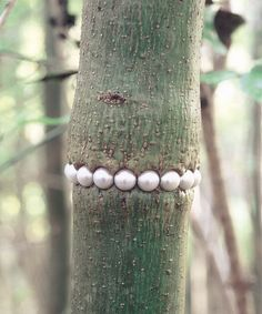 Gisbert Stach. Object: Tree necklace, 2004-2009. Plastic, steel, wood.. In Process .