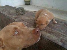 Awwwwwwwww!!!!!So sweet!!<3.......
