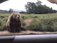 This bear | 40 People (And Animals) Who Are Living The Best Life Ever