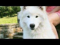 YouTube- Kellee Maize_ La La Love MV