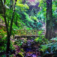 Route to Percy's Falls - Wellington NZ - SJ