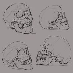 skull_sketches_1 by ksenolog.deviantart.com