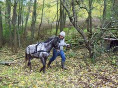 Pulled small logs out of the woods with my daughter's pony, Hazel.