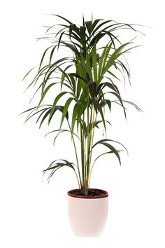 Bring+the+Green+Inside:+10+Great+Indoor+Plants+That+Will+Help+You+Breathe+Easier