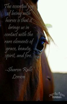 Horse quote -Love this picture!