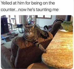 Cat, Kitten, Photograph, Funny animal, Image, Meme, Lolcat, Laughter, Humour Meme: Yelled at him for being on the counter..now he's taunting me