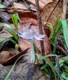 """107 """"Μου αρέσει!"""", 0 σχόλια - Evanthia Kaba (@evanthia_kaba) στο Instagram: """"#nature #mashroom #forests #mountains #love_nature #naturephotography #naturelovers #nature_pics…"""" Moth, Insects, Nature, Animals, Instagram, Naturaleza, Animales, Animaux, Animal"""