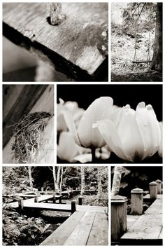 Whistler Wedding Photographer Whistler, Pinterest Board, White Photography, Outdoor Living, Wedding Ideas, Weddings, Black And White, Pretty, Outdoor Life