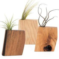 Wood Air Plant Holder on AHAlife
