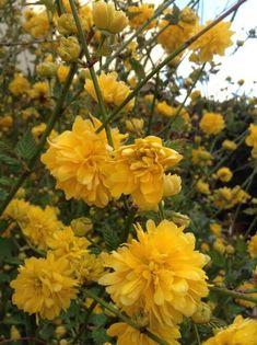 Hufflepuff Aesthetic, Bright Happy, Aes Yellow, Aesthetic Beautiful