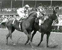 My Gallant  Winning the Blue Grass (1973) Won: Blue Grass S.-G1 (defeating Forego and Our Native) 2nd: Arlington Invitational S, Flamingo S.-G1 (to Our Native), Discovery H.-G3, Roamer H.-G2 3rd: Belmont S.-G1 (won by Secretariat), Fountain Of Youth S.-G3. 9th in Ky Derby.  Foaled April 14. Died July 19, 1989, at Bridlewood Farm, Fla.