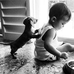 dachshund puppy and baby