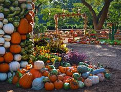 Autumn at the Arboretum, #AAArboretum, Dallas Arboretum, Dallas, Garden, Pumpkin Display, Pumpkin Patch, Fall, 2015, Autumn, Pumpkin Village