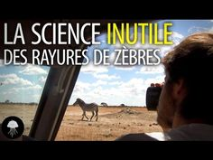 The useless science of zebra stripes - DBY Science, Challenges, Internet, Study, How To Plan, Motivation, Youtube, Decor, Culture