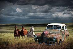 Art Vintage, Vintage Cars, Classic Trucks, Classic Cars, Pinup, Horse Saddles, Abandoned Cars, Car Photography, Beautiful Horses