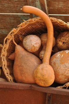 @ Melanie- cuz I know you like gourds.