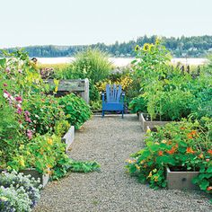Paths connect raised beds  Generous gravel paths between raised vegetable beds give this Washington garden its casual farmer's market style.    Wide enough to accommodate wheelbarrows, the gravel paths ― laid atop landscape fabric ― the paths stay mostly clean and weed-free.