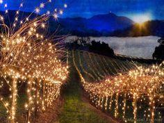 Field of lights for an evening vineyard weddings  Lights lights and more lights  Comments/gemjunkiejewels