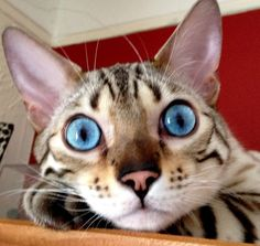 Look into my eyes!  =^..^=