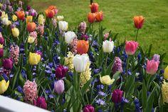 Keukenhof ist einer der größten Tulpen-Schaugärten der Welt! Wer am Wochenende nichts geplant hat, kann einen Ausflug zum Keukenhof planen. Sie finden alle Infos zur Geschichte, Fakten, Zahlen und Anfahrt sowie mit 60 schönen Bildern im Blog-Beitrag auf http://www.nebelung.de/ueber-uns/news/keukenhof/ Wir wünschen Ihnen ein schönes Wochenende.