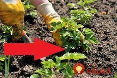 Na to, aby sa vaším rastlinkám v záhrade darilo, stačí niekedy skutočne málo. Zabudnite na drahé prostriedky z obchodu na podporu rastu a ochranu proti škodcom. Poradíme vám niečo omnoho lepšie.