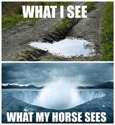 What I see, what my horse sees! Explains alot! #eecustomhorseshoes #everythingequinenorco #whatiseewhatmyhorsesees