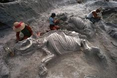 """Ashfall Fossil Beds: Fossil """"Pompeii"""" of Prehistory"""