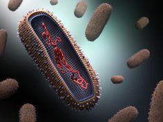 Influenza Virus