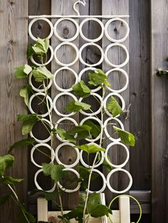 Retire KOMPLEMENT multi-use hanger from belts, scarves and ties and use it as a. Retire KOMPLEMENT multi-use hanger from belts, scarves and ties and use it as a support for climbi Indoor Climbing Plants, Climbing Plant Support, Climbing Vines, Indoor Plants, Ikea Plants, Liatorp, Belt Hanger, Scarf Hanger, Scarf Belt