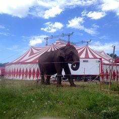 Are we going to talk about the elephant in Tuscania?  #circus #elephant #Tuscania #travel #travelgram # Italy #fun #local #lazio
