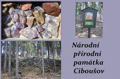 Lokalita Ciboušov je situována na úpatí Krušných hor, nedaleko města Klášterce nad Ohří.Je  chráněná z důvodu ochrany mineralogického naleziště jaspisů a ametystů, drahokamenné formy křemene. Křemenné žíly s drahokamovými odrůdami, jaspisy a ametysty, byly v této oblasti nalezeny ve 14. století a jejich těžba probíhala až do 16. století.Těmito minerály nechal Karel IV. vyzdobit kaple hradu Karlštejna a svatováclavskou kapli ve svatovítské katedrále na Pražském hradě.