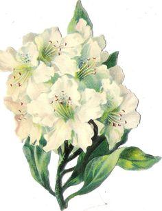 Oblaten Glanzbild scrap die cut chromo Blume flower 13,5 cm Blüte blossom