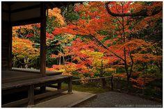 Autumn colors at their peak in Saiho-ji temple (西芳寺) | Flickr