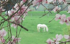 Got a question about pasture health?  Schedule a phone consult! www.happyhorsehealthyplanet.com