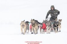 Jeff King runs on the trail in a snowstorm nearing the Unalakleet checkpoint on Monday  afternoon March 12th during the 2018 Iditarod Sled Dog Race -- AlaskaPhoto by Jeff Schultz/SchultzPhoto.com  (C) 2018  ALL RIGHTS RESERVED: Jeff King runs on the trail in a snowstorm nearing the Unalakleet checkpoint on Monday  afternoon March 12th during the 2018 Iditarod Sled Dog Race -- AlaskaPhoto by Jeff Schultz/SchultzPhoto.com  (C) 2018  ALL RIGHTS RESERVED