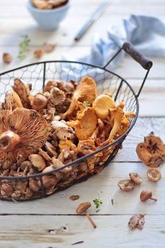 Setas, mushrooms. Todo el sabor del bosque en tus platos.
