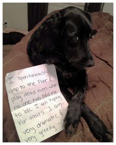 Dog Shaming features the most hilarious, most shameful, and never-before-seen doggie misdeeds. Join us by sharing in the shaming and laughing as Dog Shaming reminds us that unconditional love goes both ways. I Love Dogs, Puppy Love, Cute Dogs, Animal Memes, Funny Animals, Cute Animals, Animals Dog, Animal Funnies, Dog Shaming Photos