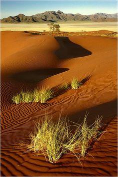 Frühling in der Wüste - Namib Rand Nature Reserve