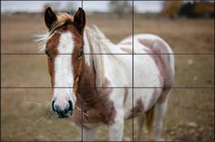 Divine Composition With Fibonacci's Ratio (The Rule of Thirds on Steroids) - Digital Photography School