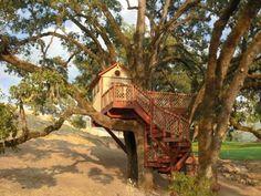 Baumhaus von Barabara Butler