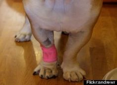 Pet First Aid: 5 Simple Tricks Every Owner Should Know