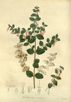 The Botanist ?containing accurately coloured fi...